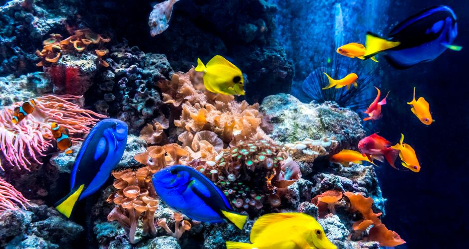 © AquaDom & SEA LIFE Berlin